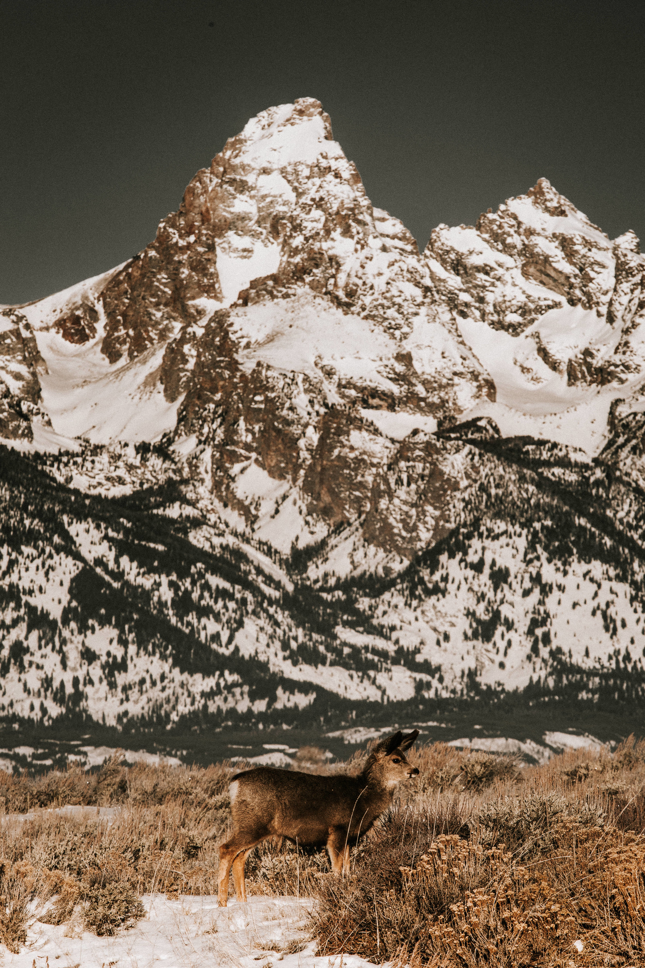 nicole-daacke-photography-jackson-hole-grand-teton-national-park-elopement-wedding-photographer-adventurous-engagement-session-grand-tetons-snow-visit-itinerary-for-jackson-hole-wyoming-9720.jpg