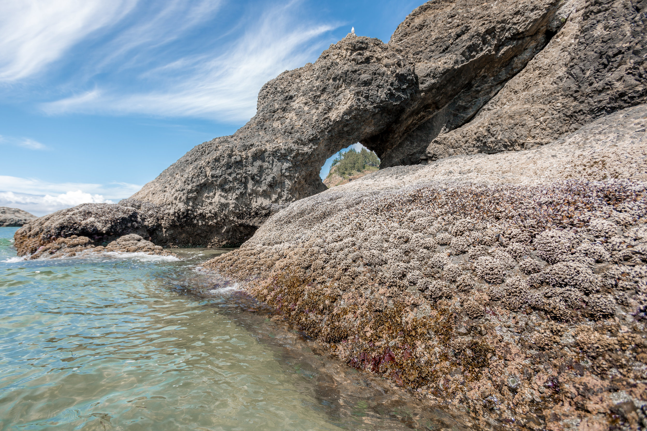nicole-daacke-photography-oregon-coast-landscapes-elopement-photographer-wedding-photography-adventure-lifestyle-roadtrip-along-oregon-coast-cape-kiwanda-oceanside-beach-cannon-beach-oregon-pnw-15.jpg