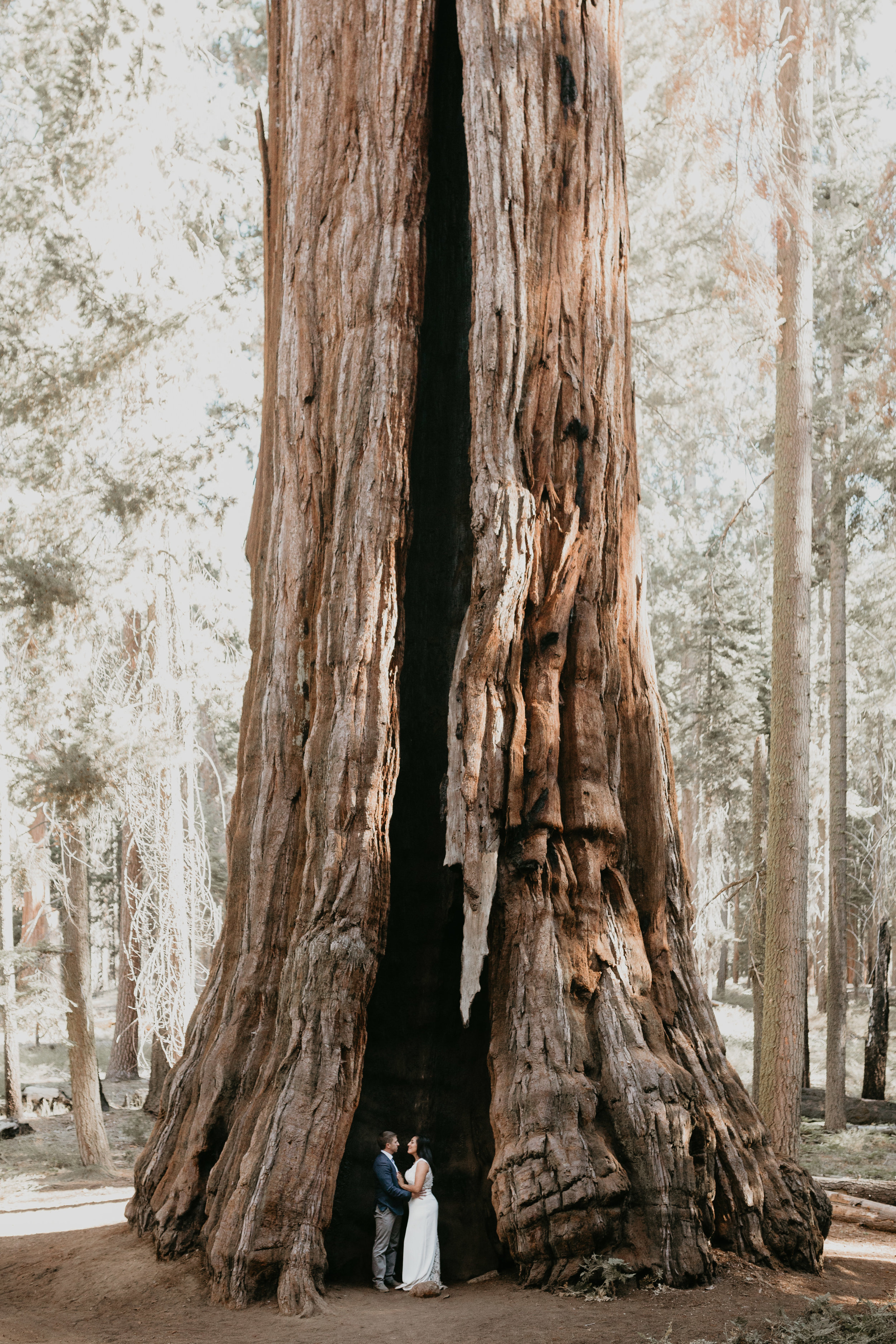 nicole-daacke-photography-sequoia-national-park-adventurous-elopement-sequoia-elopement-photographer-redwoods-california-intimate-wedding-photographer-21.jpg