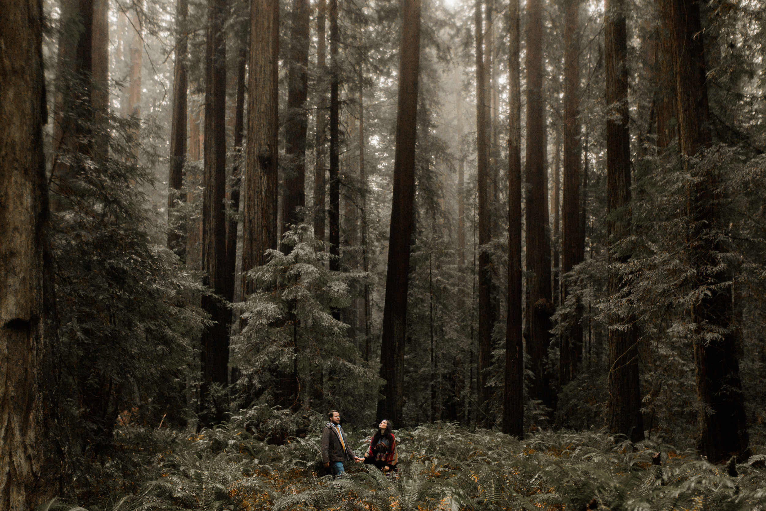 nicole-daacke-photography-redwoods-national-park-forest-rainy-foggy-adventure-engagement-session-humboldt-county-old-growth-redwood-tree-elopement-intimate-wedding-photographer-24.jpg