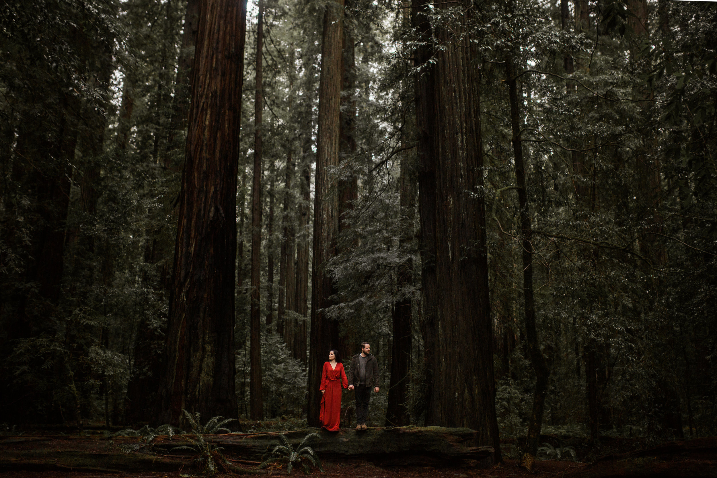 nicole-daacke-photography-redwoods-national-park-forest-rainy-foggy-adventure-engagement-session-humboldt-county-old-growth-redwood-tree-elopement-intimate-wedding-photographer-55.jpg