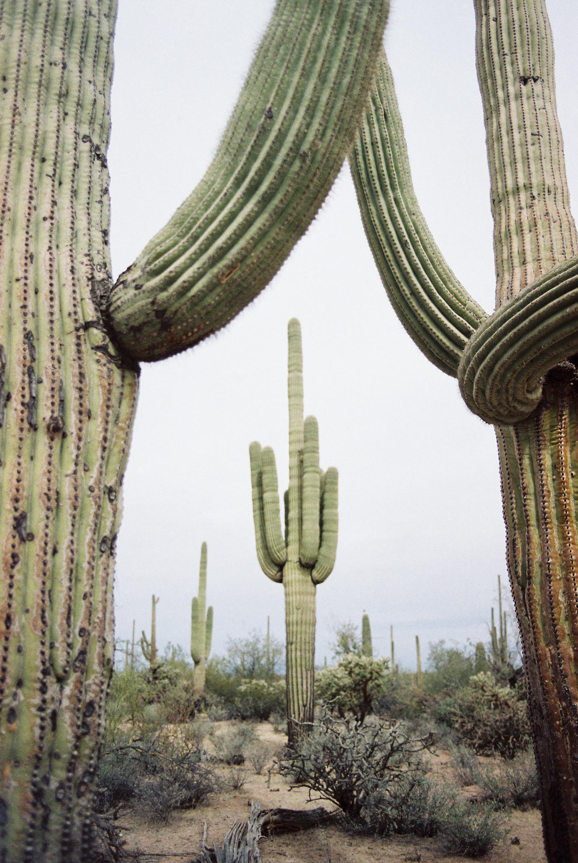 Saguaro National Park // Laura Goldenberger Photography
