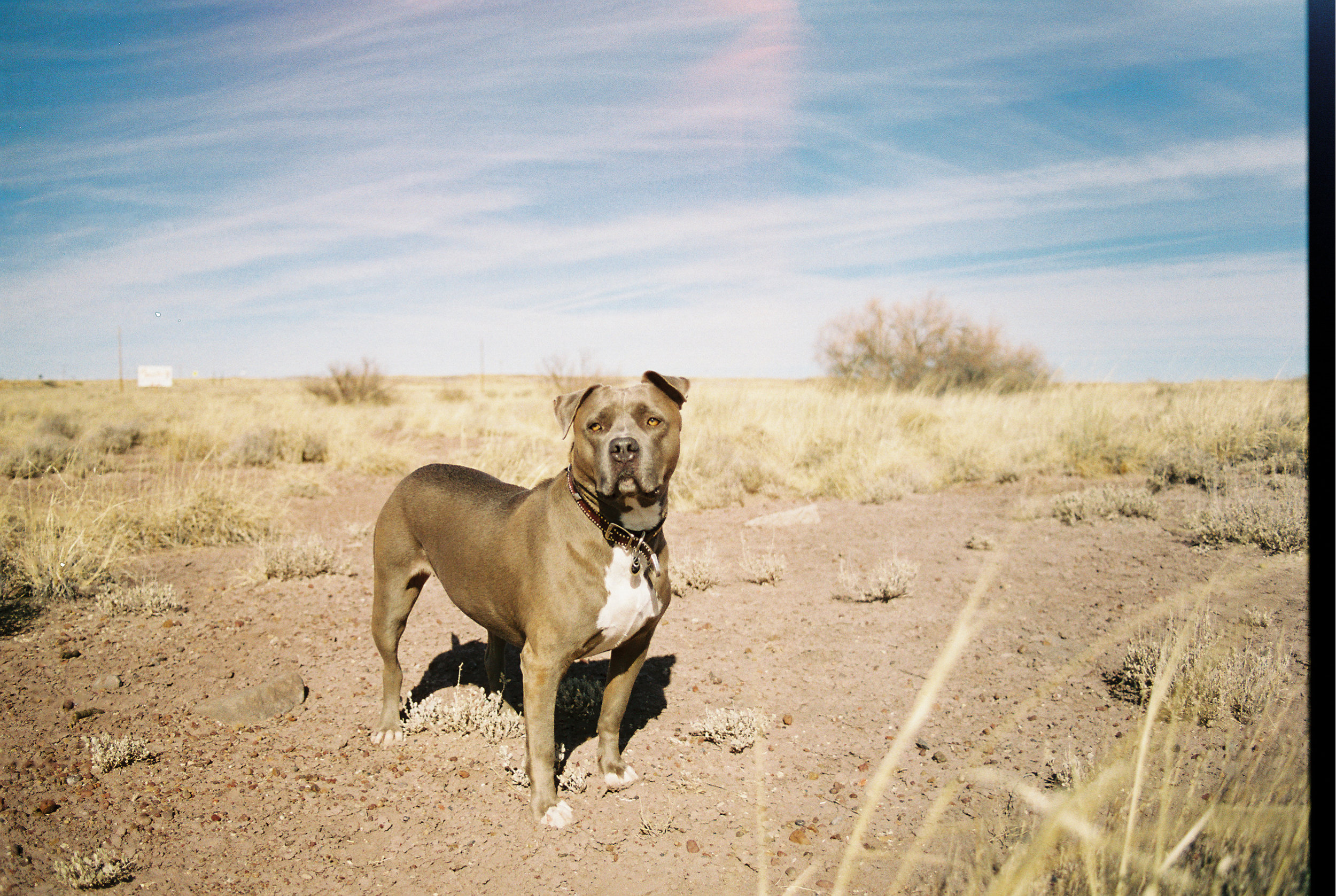 Arizona Road Trip // Laura Goldenberger
