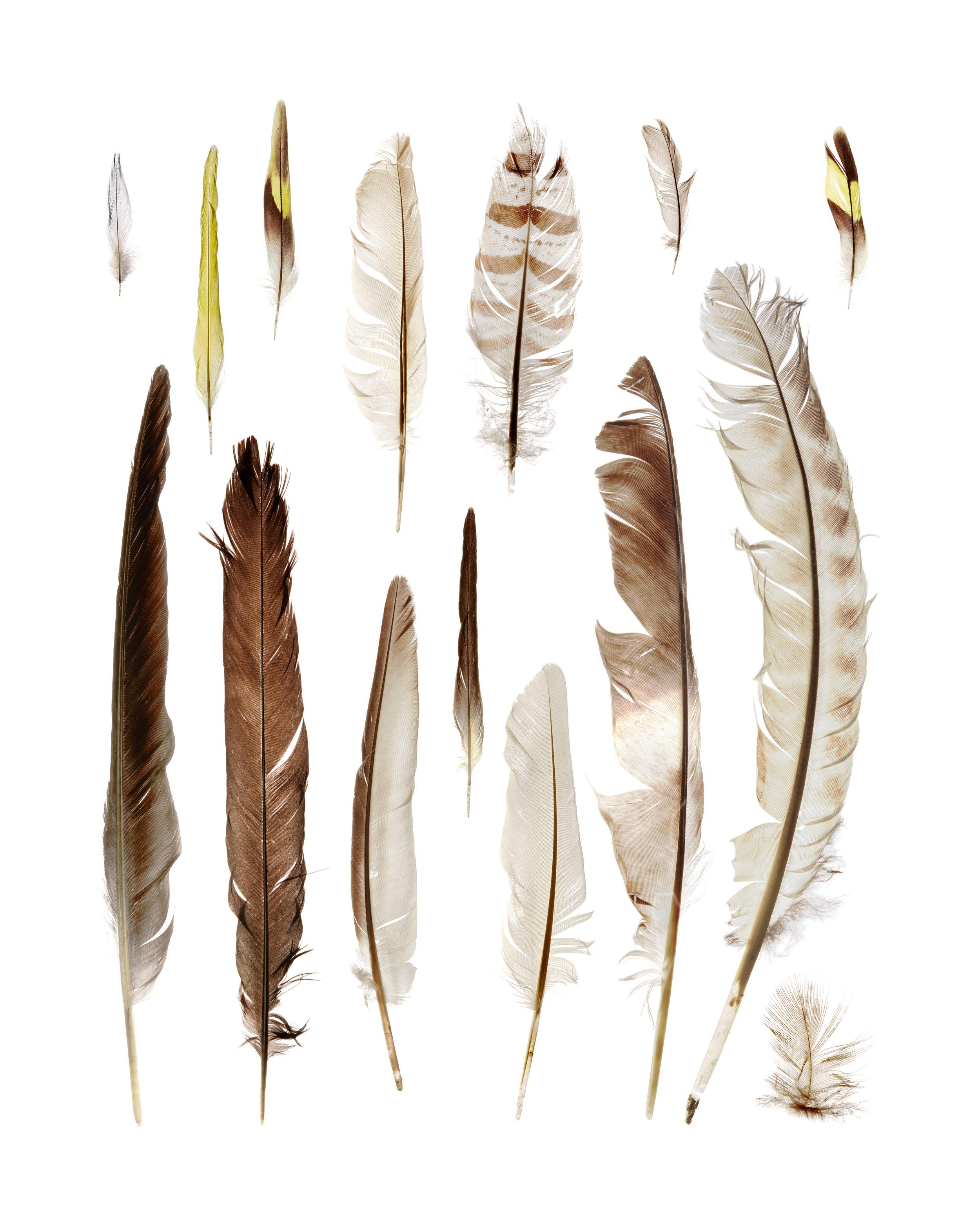 15 Feathers | Bild: Ferit Kuyas