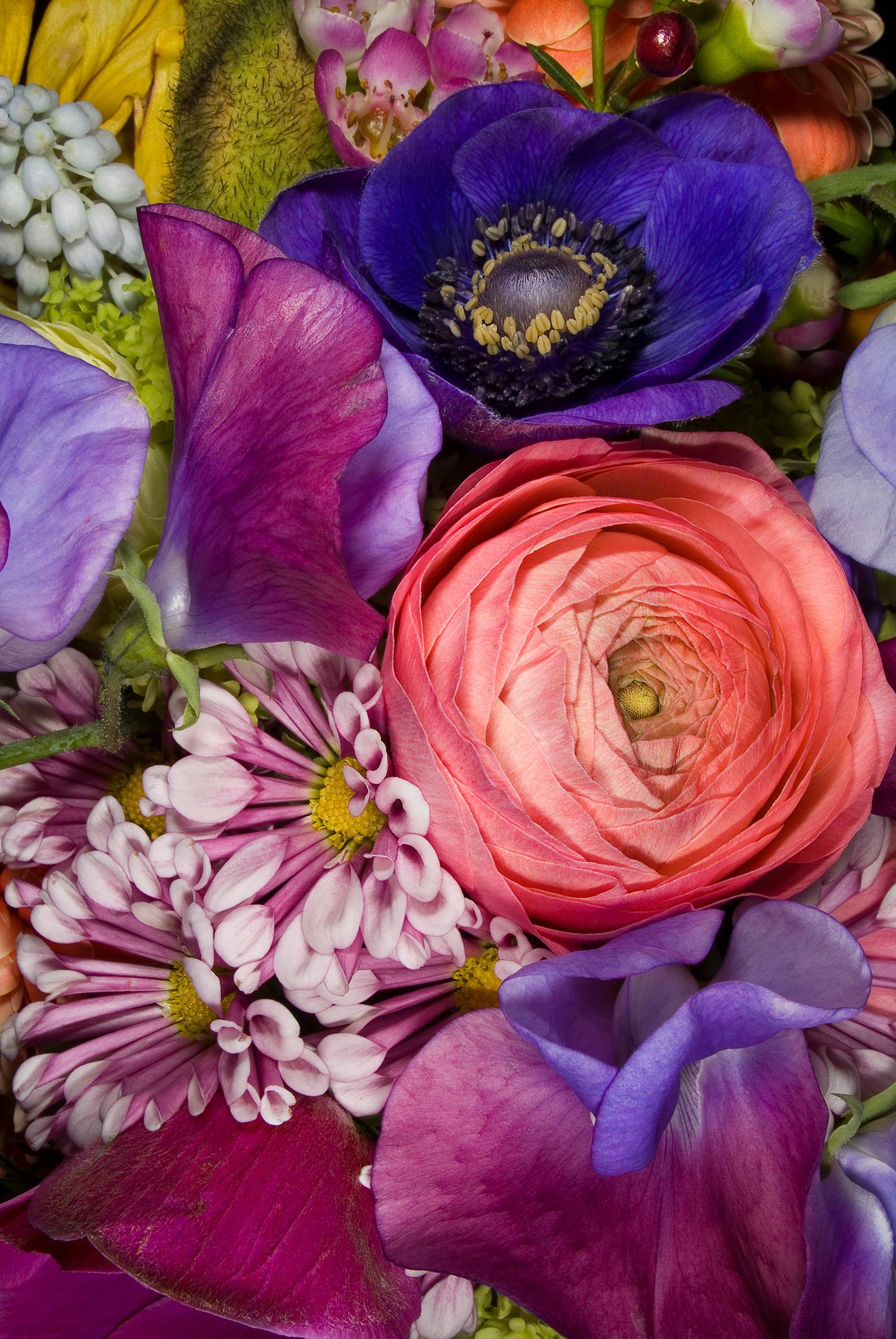 Blossom | Tableau | Anna Halm Schudel