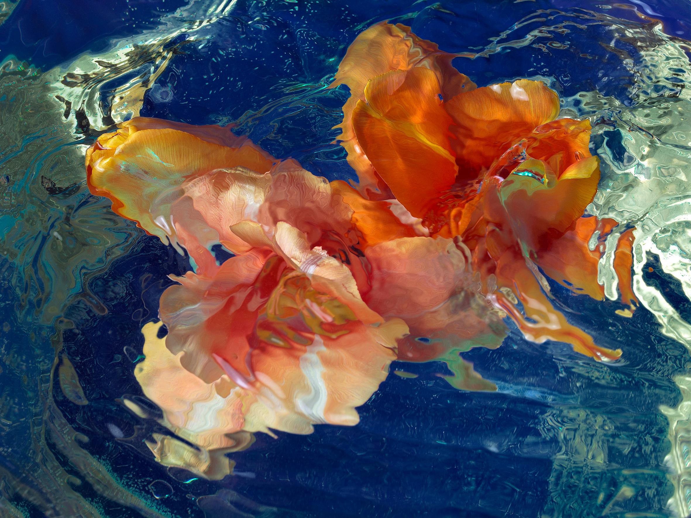Blossom | Tulpen Blumenmeer | Anna Halm Schudel