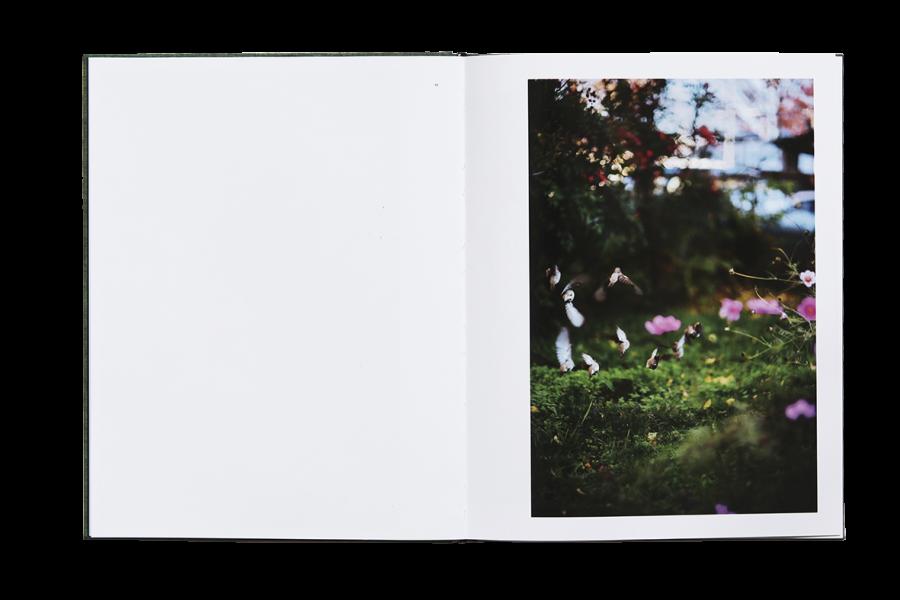 des-oiseaux (6).jpg