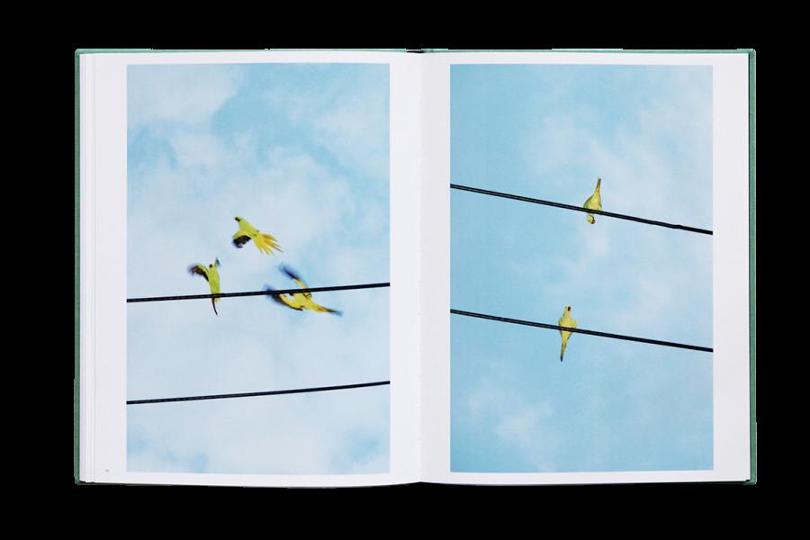 des-oiseaux (3).jpg