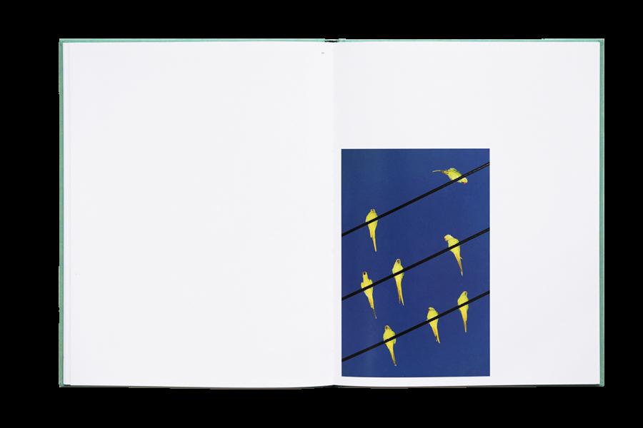des-oiseaux (4).jpg