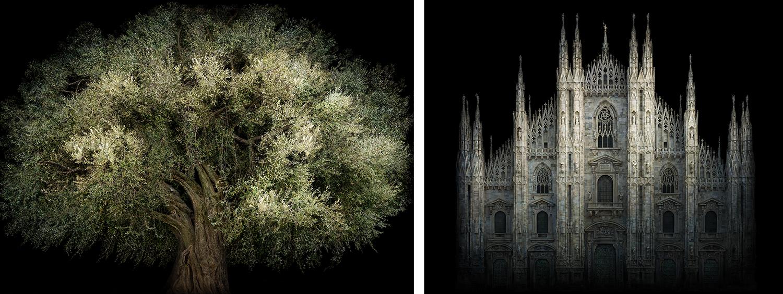 Duomo e Ulivo