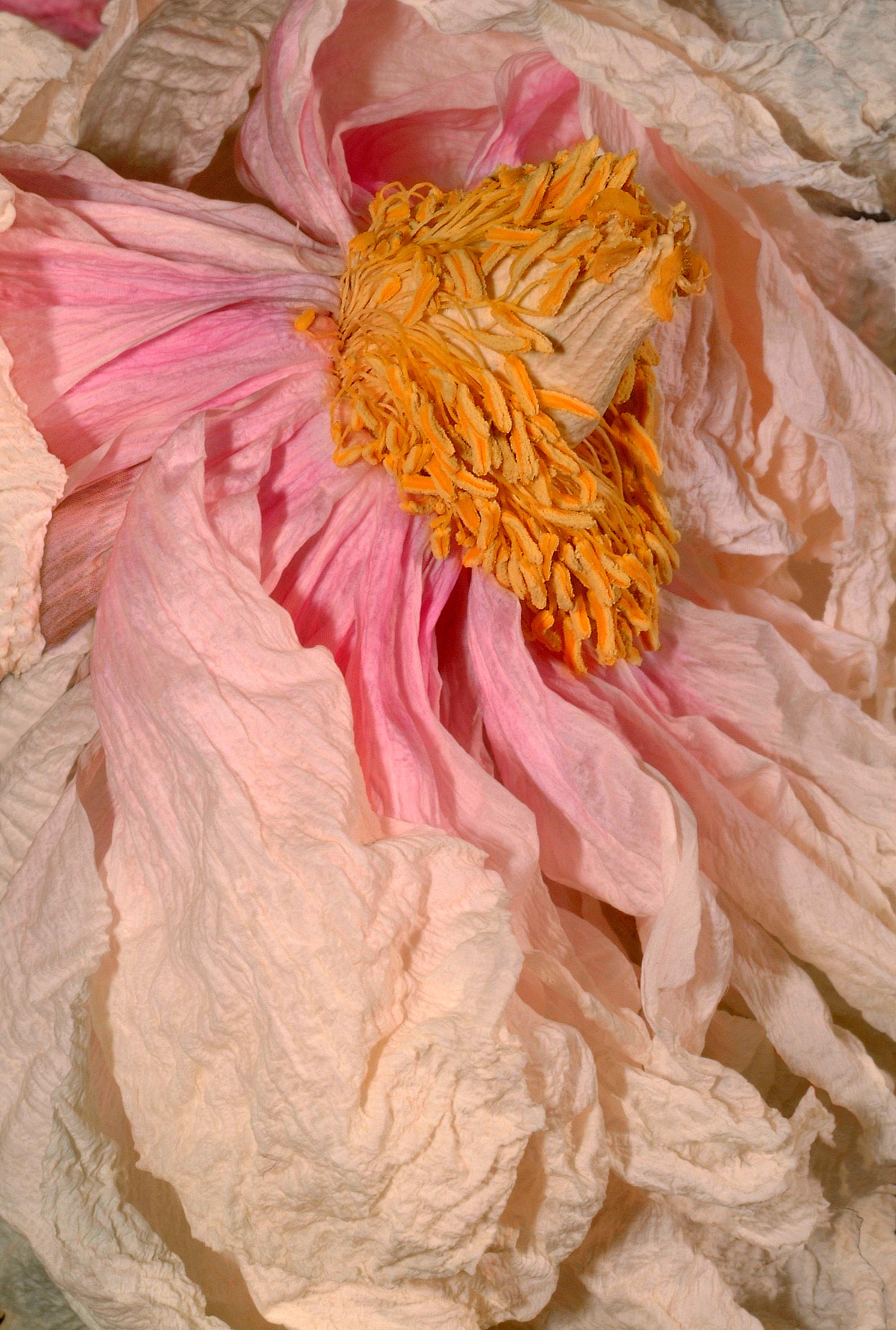 Blossom_Anna-Halm-Schudel_Cover_Pfingstrose-Blumenmeer.jpg