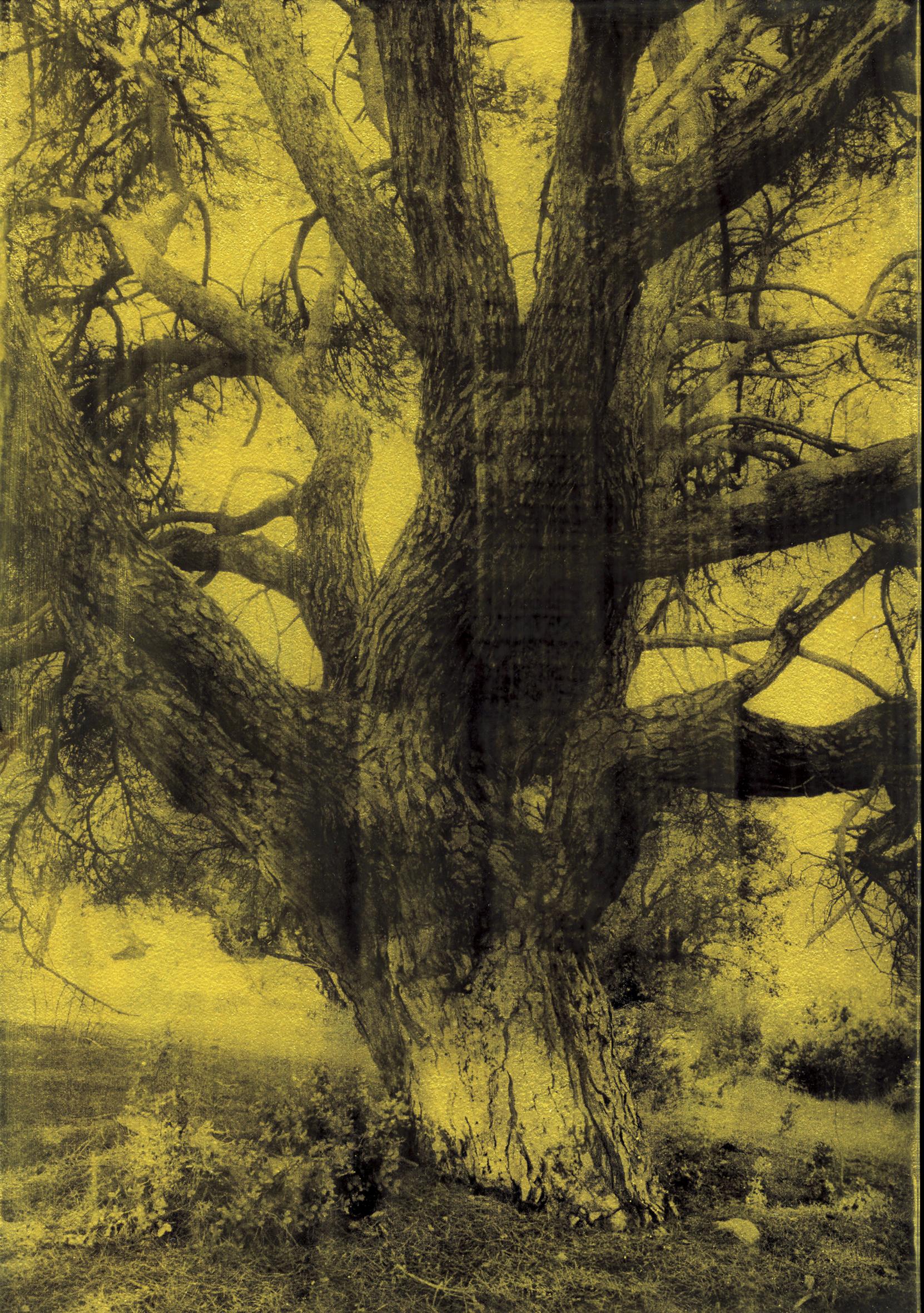 Sans titre (arbre 1), série La noche oscura 2017 – 18, tirage gelatino-argentique sur verre, peinture dorée châssis bois noir, 30 × 21 cm, pièce unique dans une édition de 3 | © Anaïs Boudot / Courtesy Galerie Binome