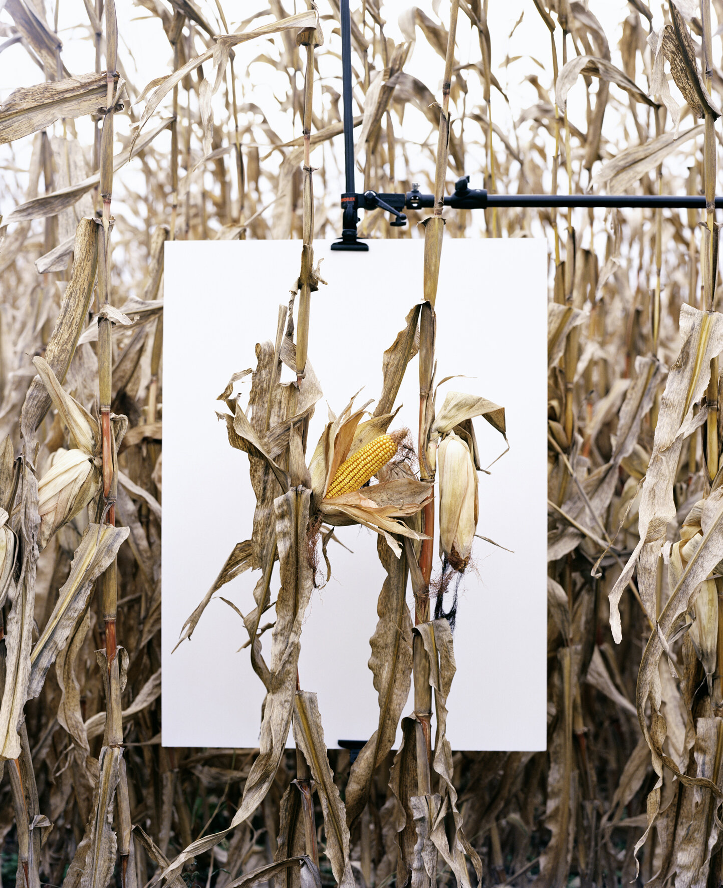 "Aus der Serie ""Monsanto®: A Photographic Investigation"", 2012, © Mathieu Asselin"