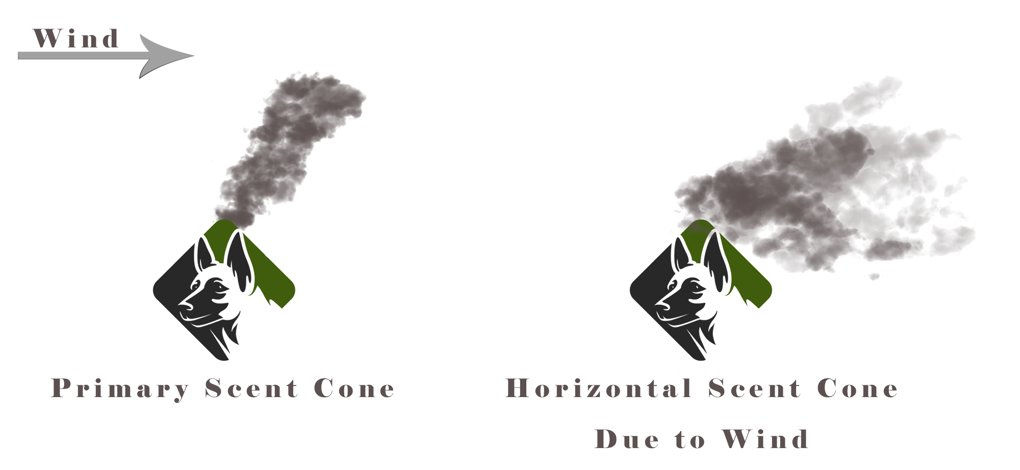 Air movement shifts scent molecules away from the source forming a cone-shape gradient of decreasing concentration and increasing dispersion. Air flow will move the scent away from the source in the direction of the wind, forming an air scent cone.