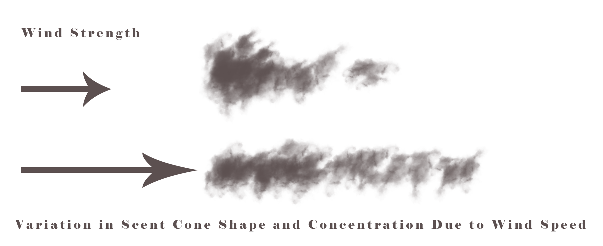 The Shape of the scent cone can be affected by the strength of the wind.