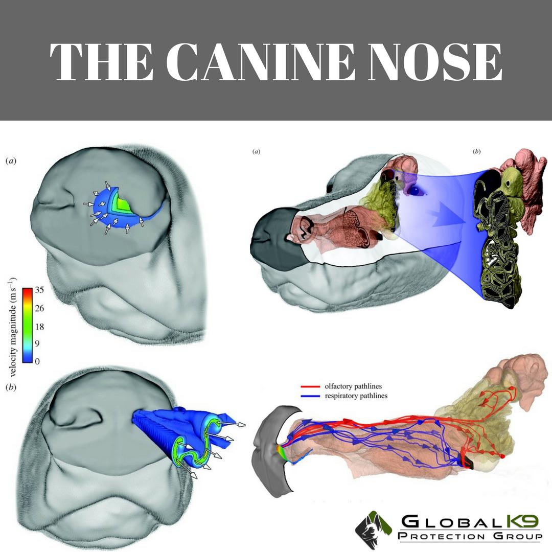 Canine Sensory Technology
