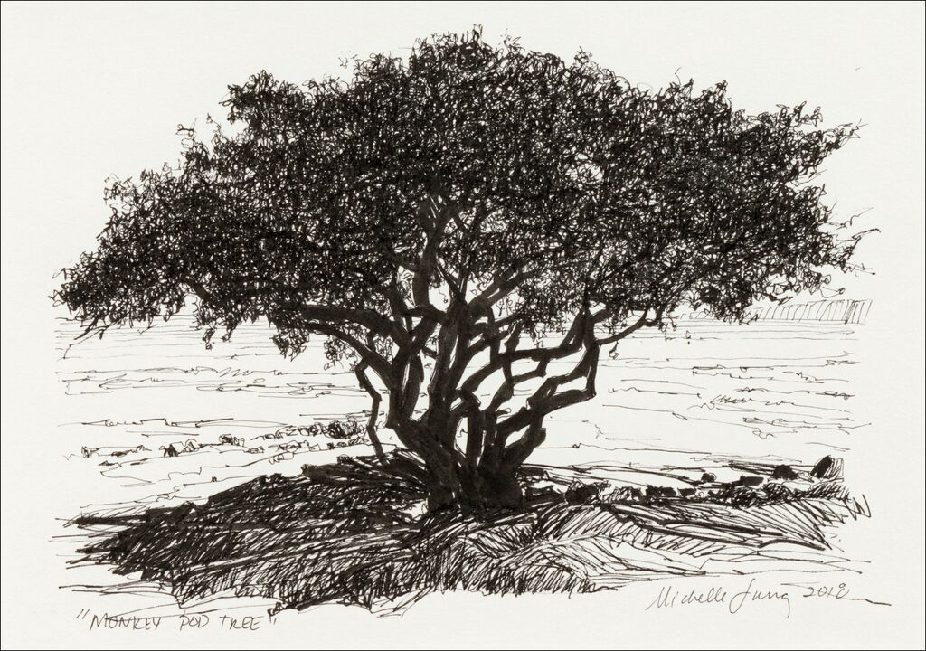 Monkey Pod Tree Study ~ Kihei, HI