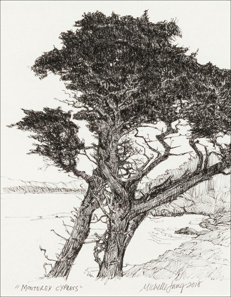 Monterey Cypress ~ Monterey, CA