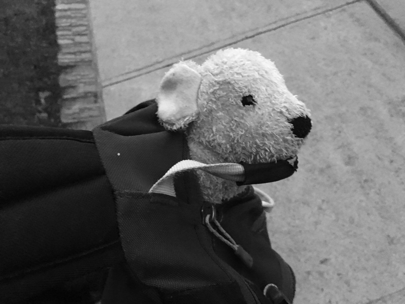 A small stuffed dog sticks its head out of a backpack