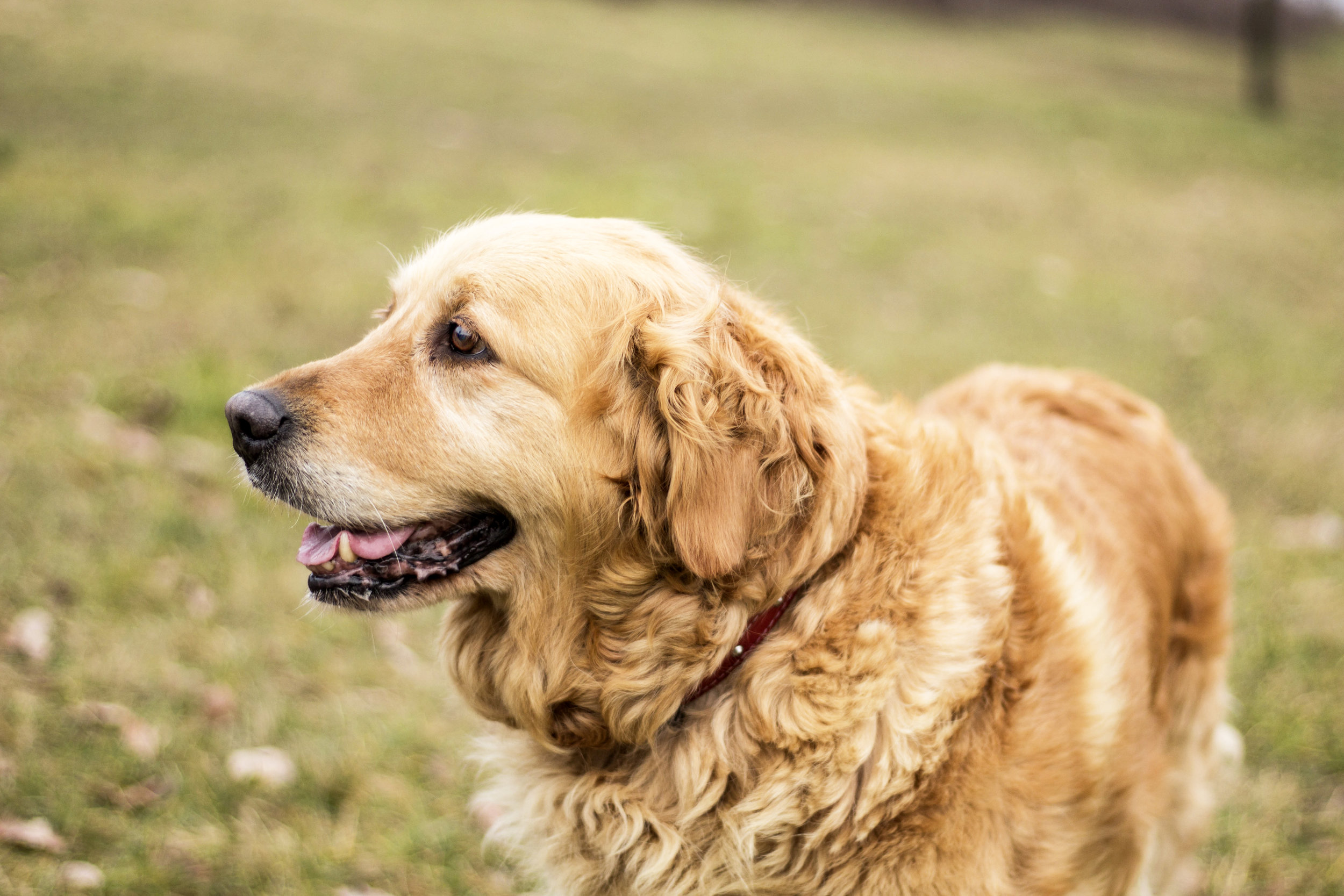 Senior Dog Nutritional Requirements
