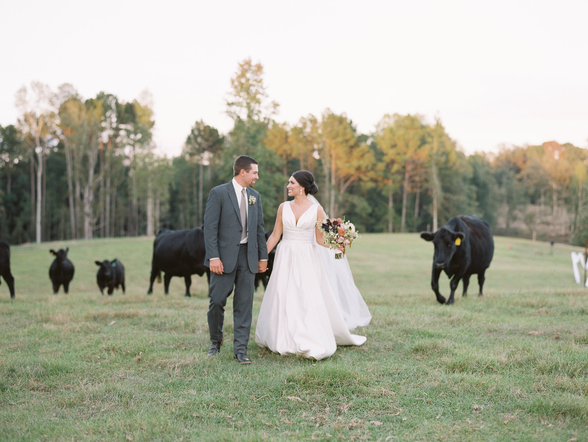outdoor-wedding-with-cows-fall-wedding