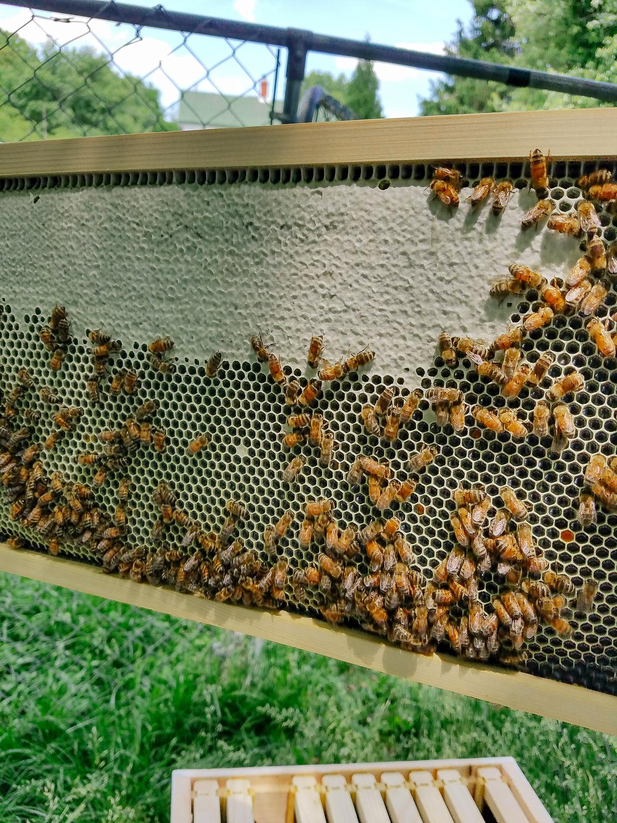 Honey-Comb-AT-Plumbing-Roanoke-Virginia