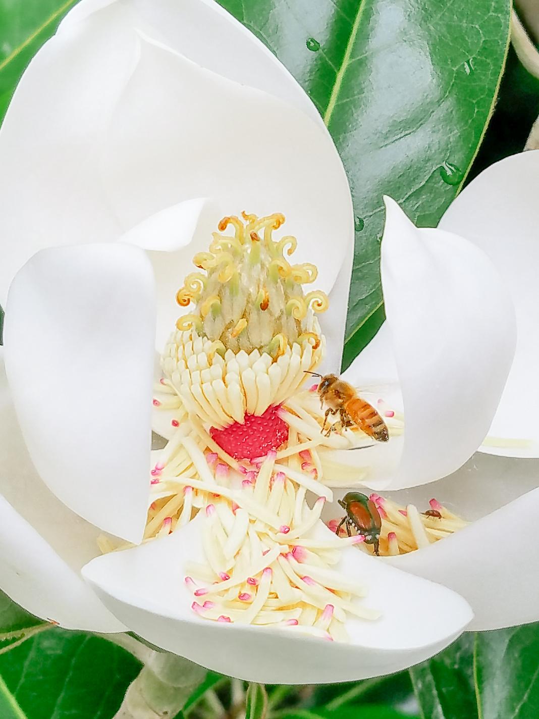 Honey-Bee-AT-Plumbing-Roanoke-Virginia