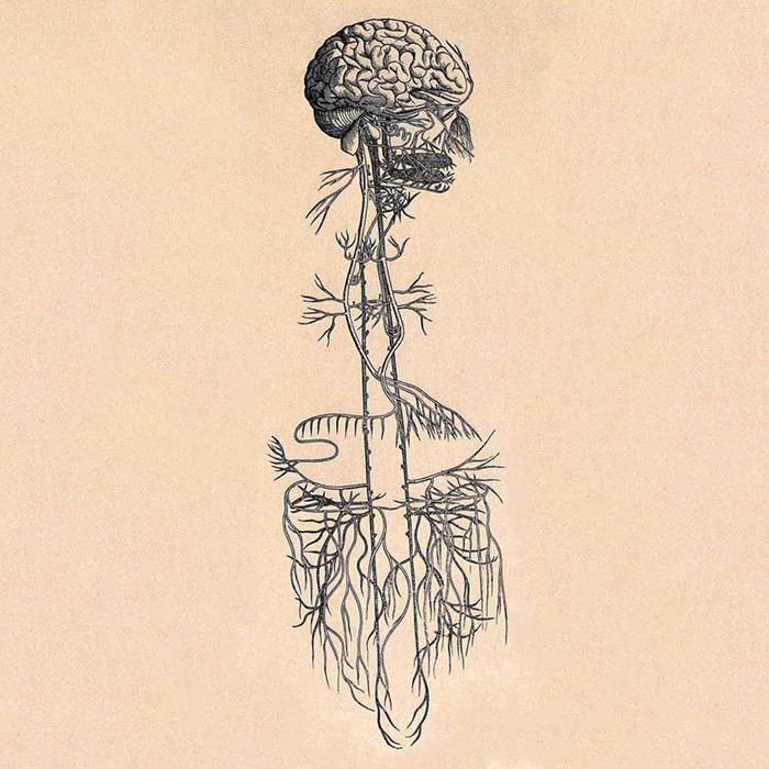 09-vagus-nerve.w700.h700.jpg