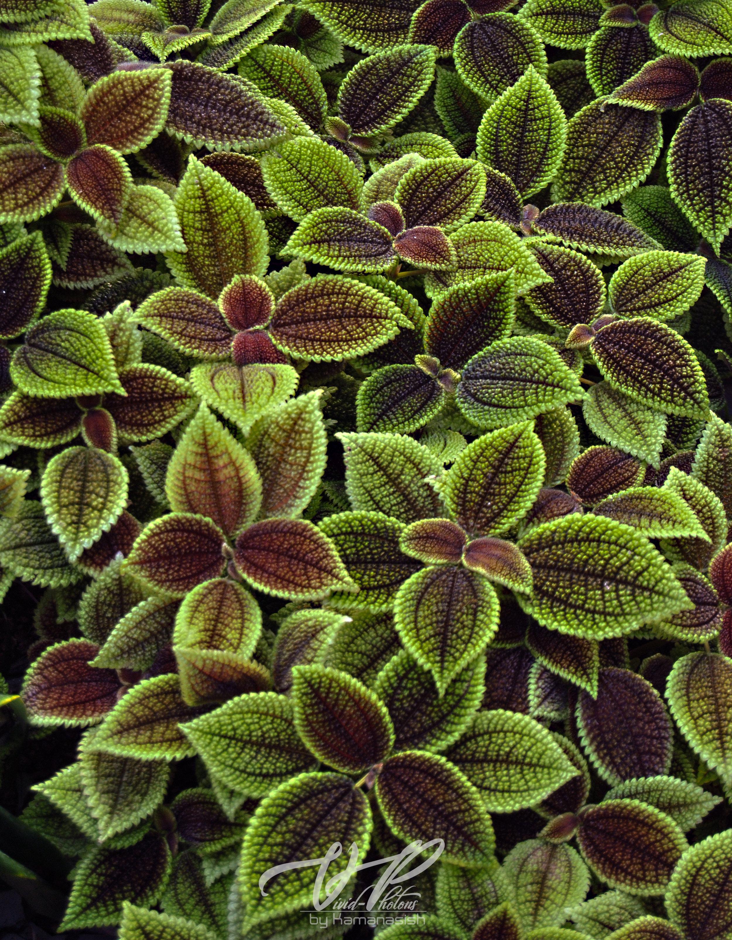 leaves_jpg.jpg