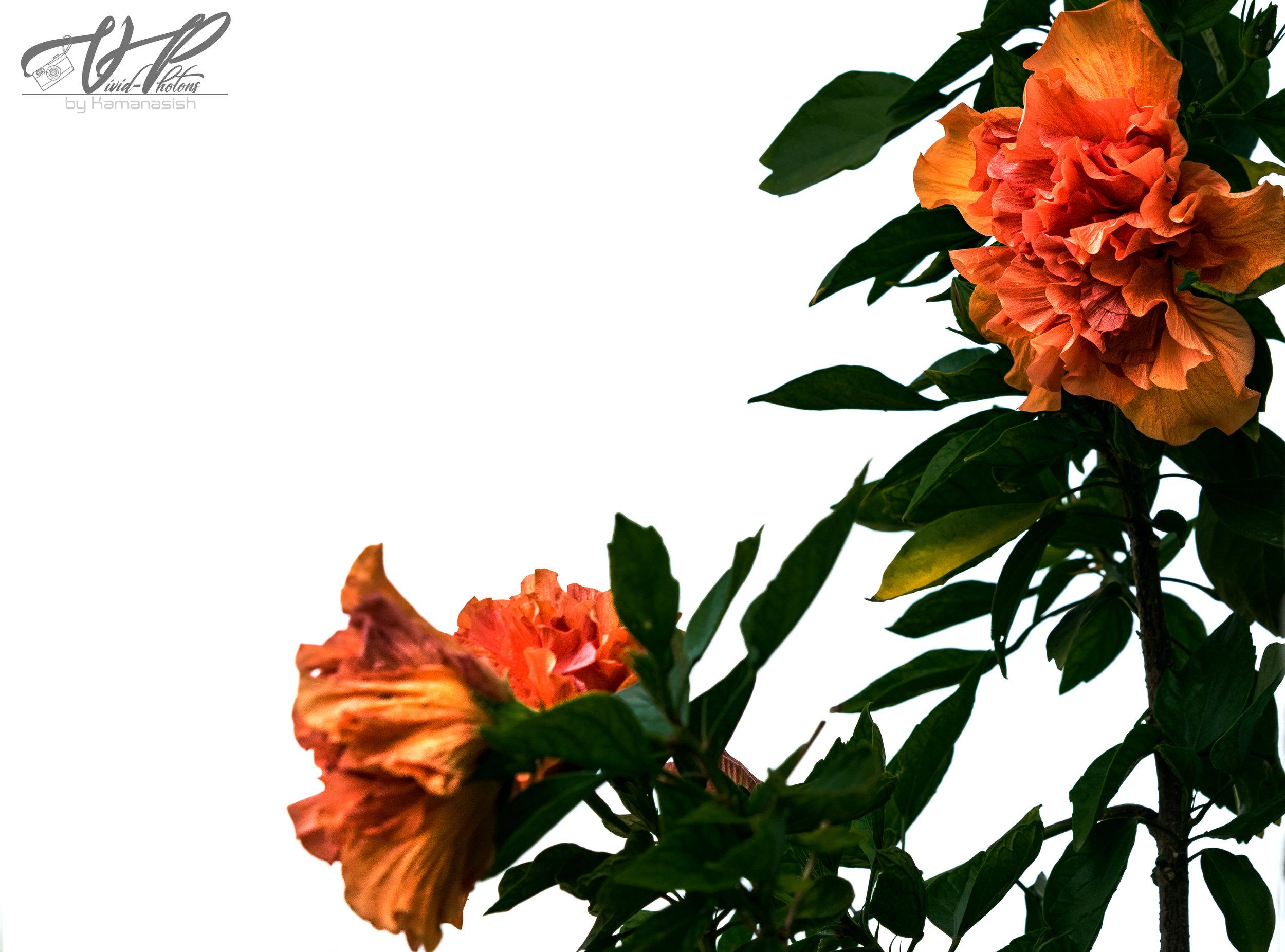 flower2 jpg.jpg