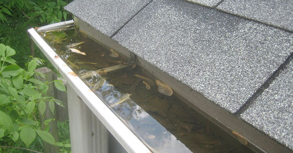 signs-you-have-clogged-gutters-2nd-image-2017.jpg