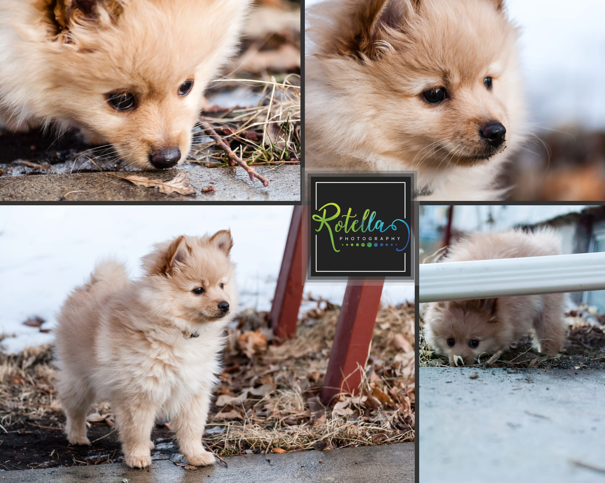 Our dog Grr as a baby - Rotella Photography