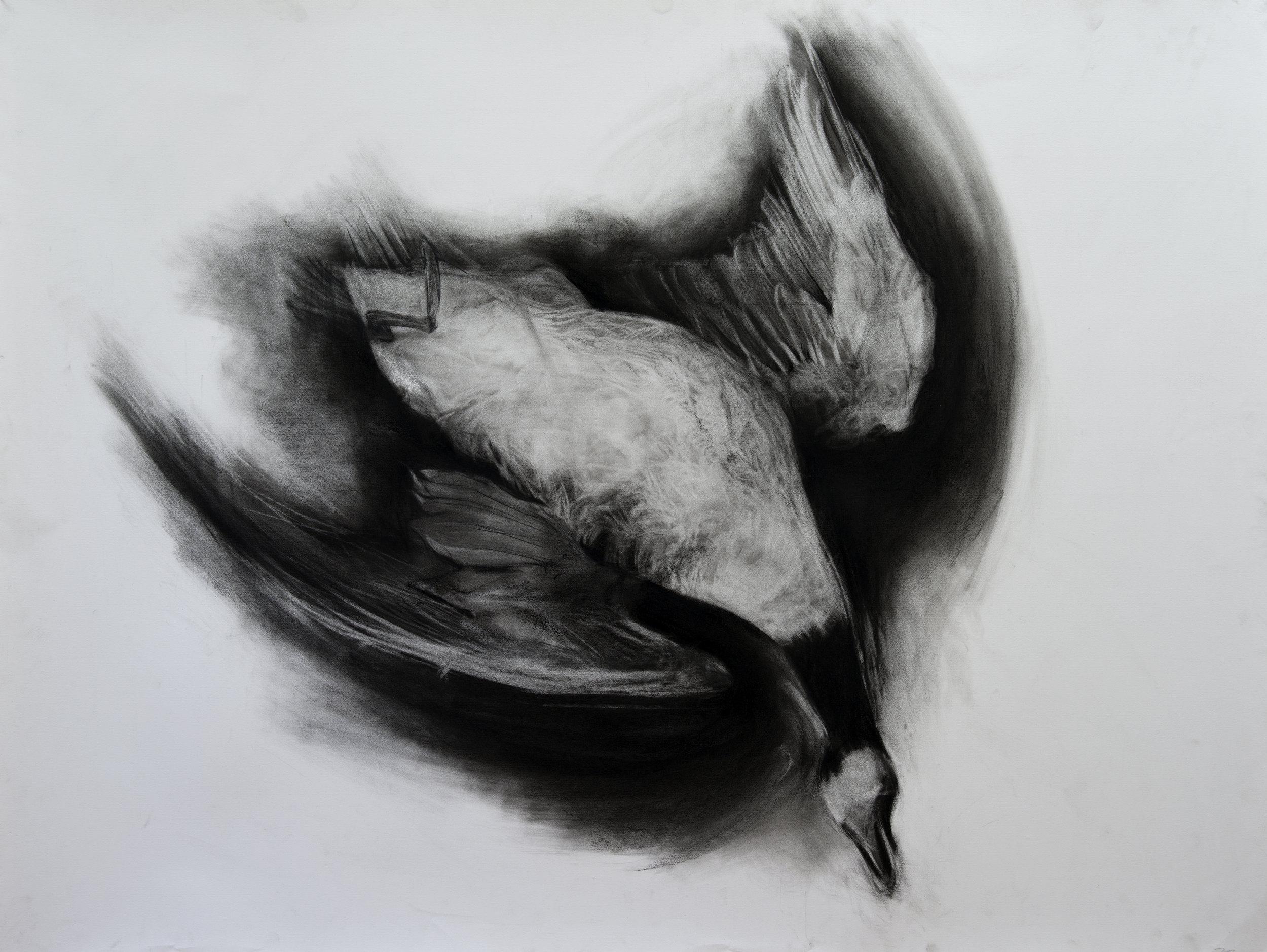 Port Royal goose