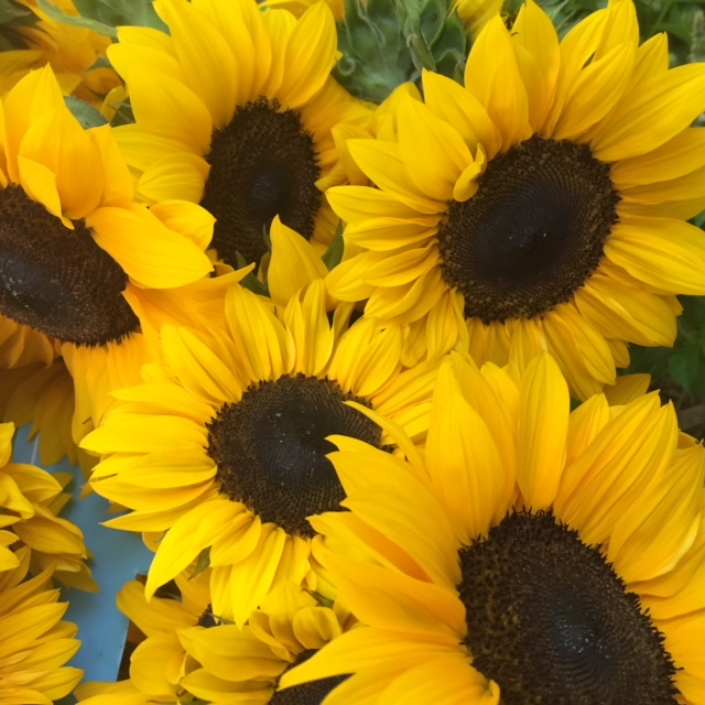 Sunflowers are always available individually, by the bucket or in sunflower focused bouquets