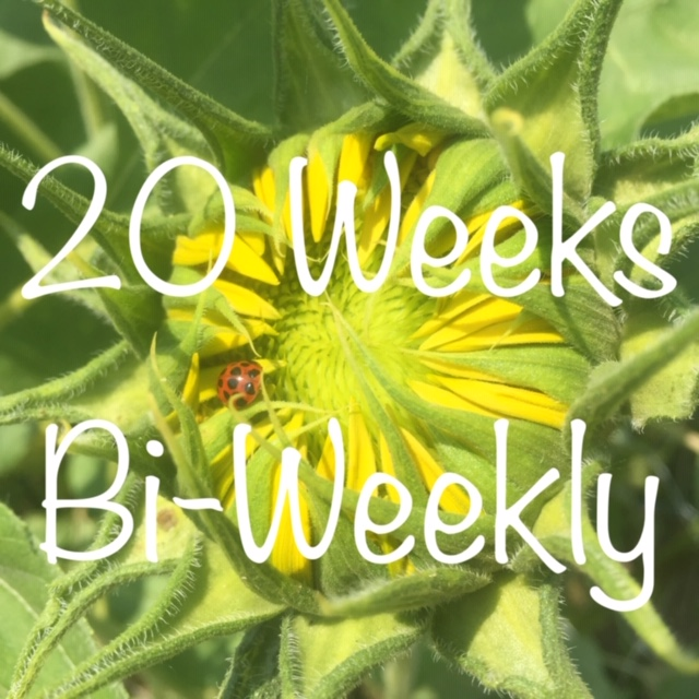 10 Bouquets, One Every Other Week Over 20 Weeks - $18/bouquet for a total of $180Billed in 5 equal installments of $36Sign-up anytime before Friday, May 17th