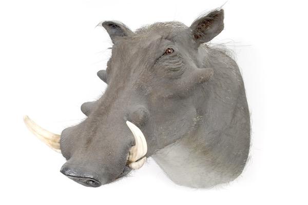 warthog.jpg