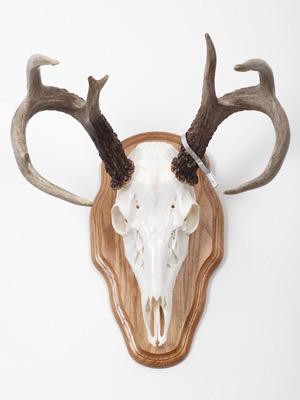 DeerOnPanel.jpg