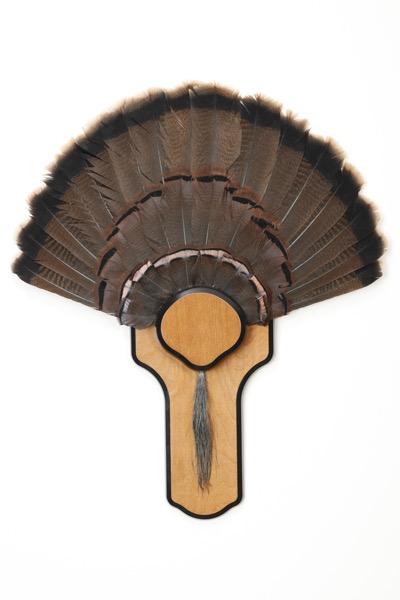 turkeytail2.jpg