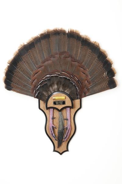 turkeytail.jpg