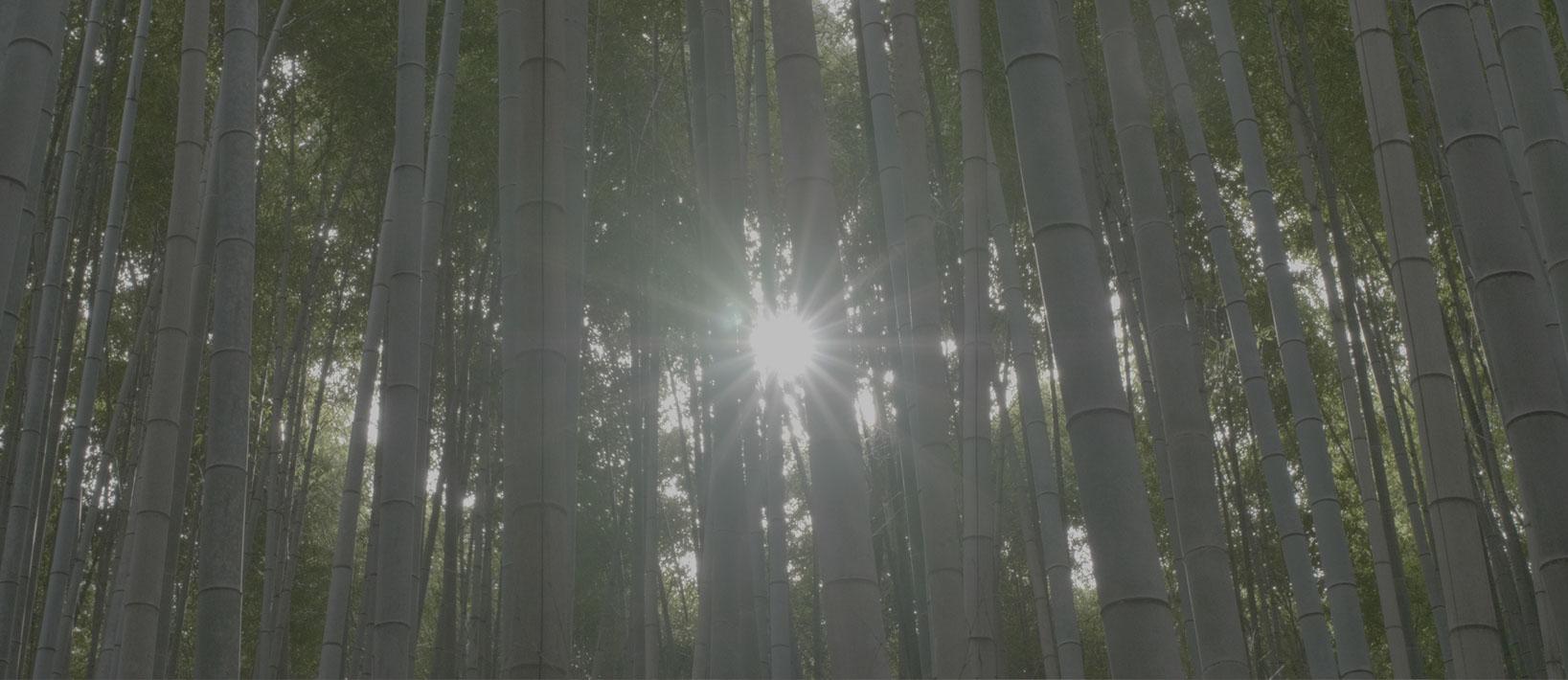 pre_bamboo.jpg