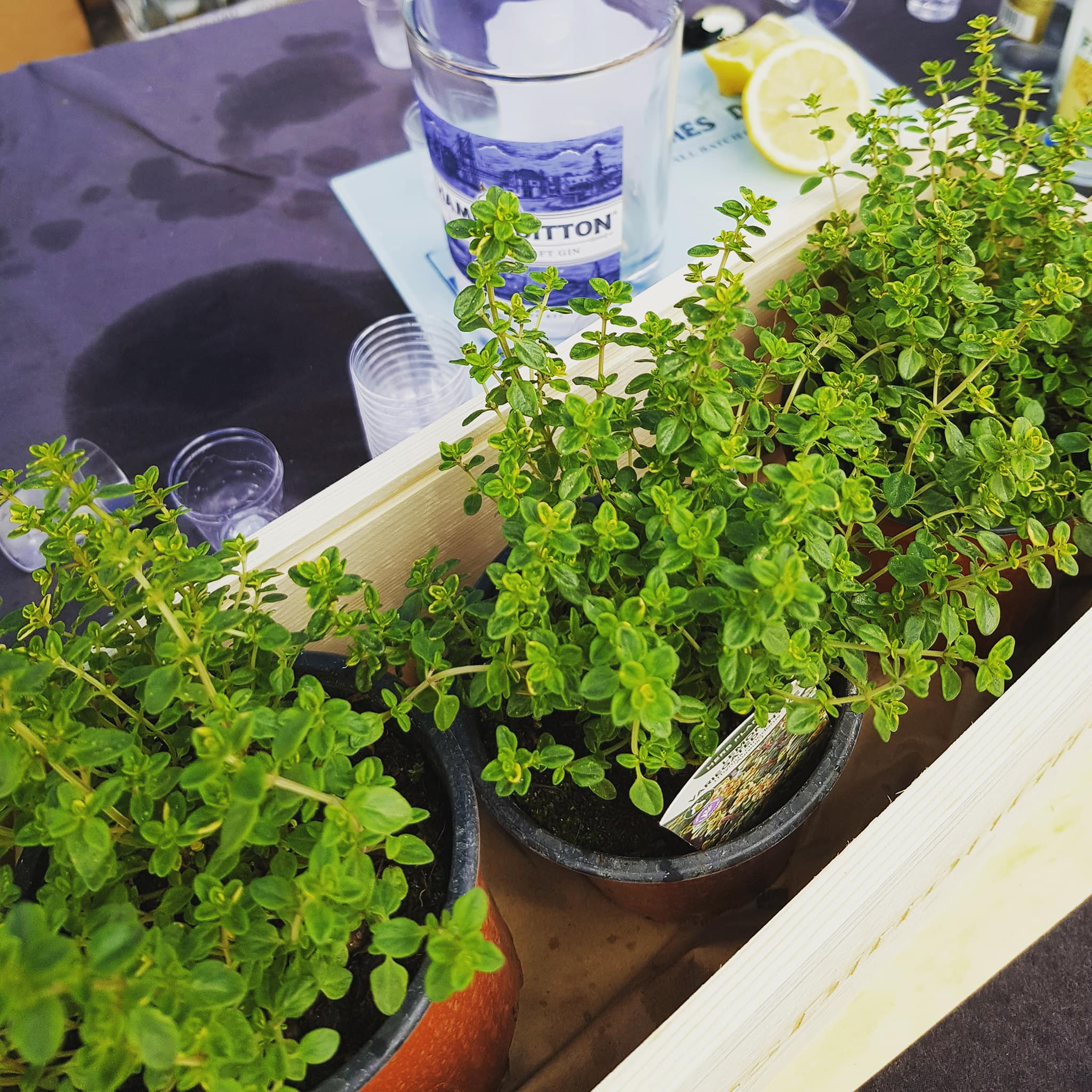 TDG herbs.jpg