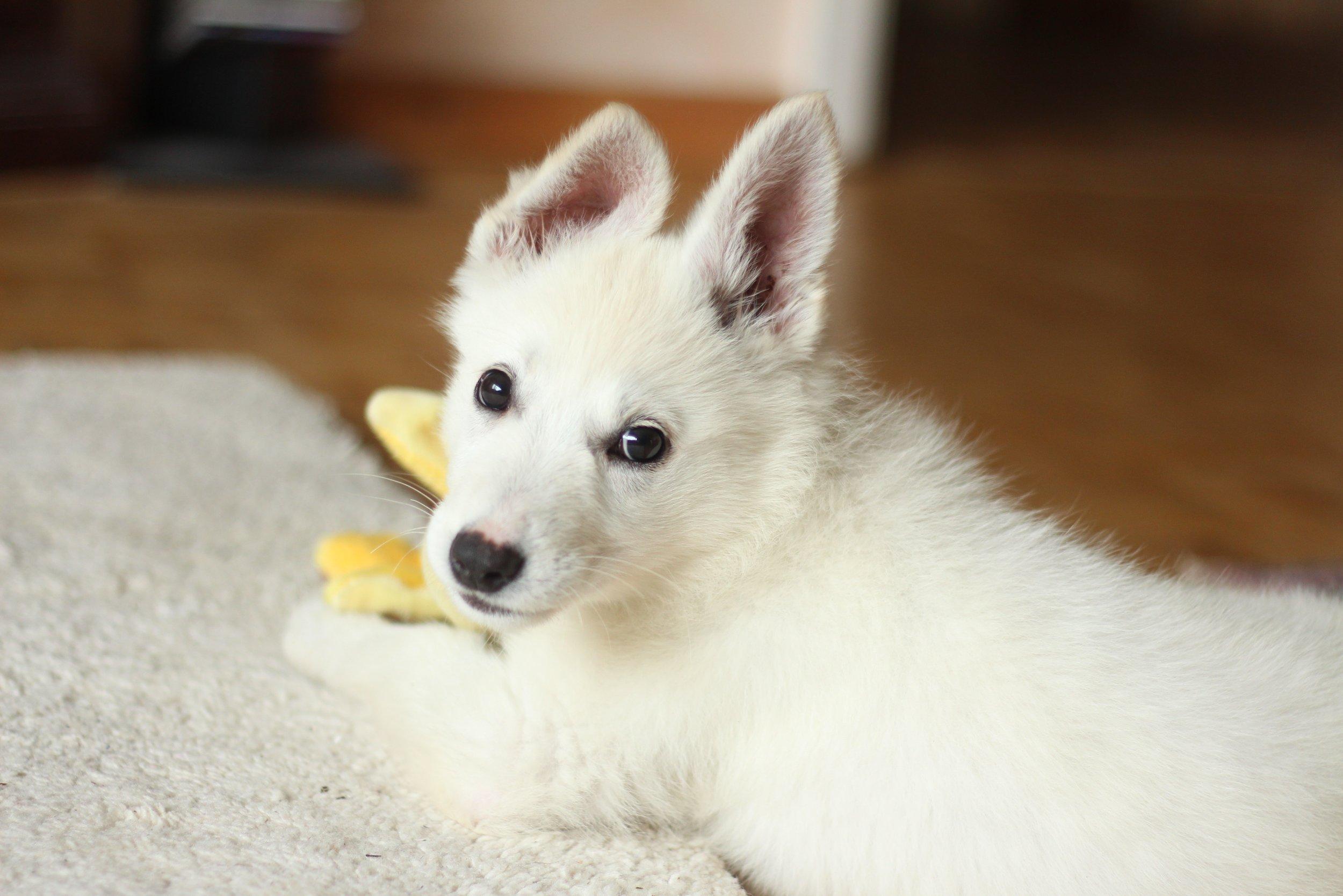 adorable-animal-breed-846083.jpg