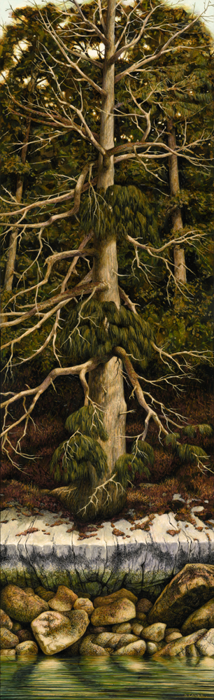 Cedar - Copyright Protected by Stephen Lawrie