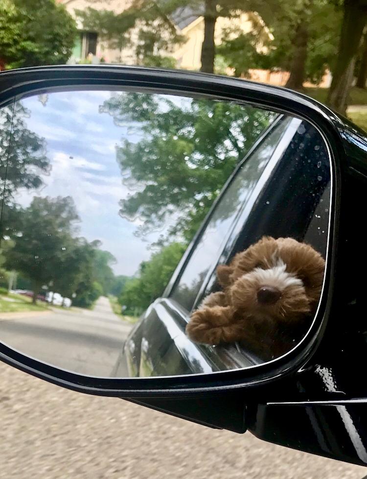sam in car.jpg