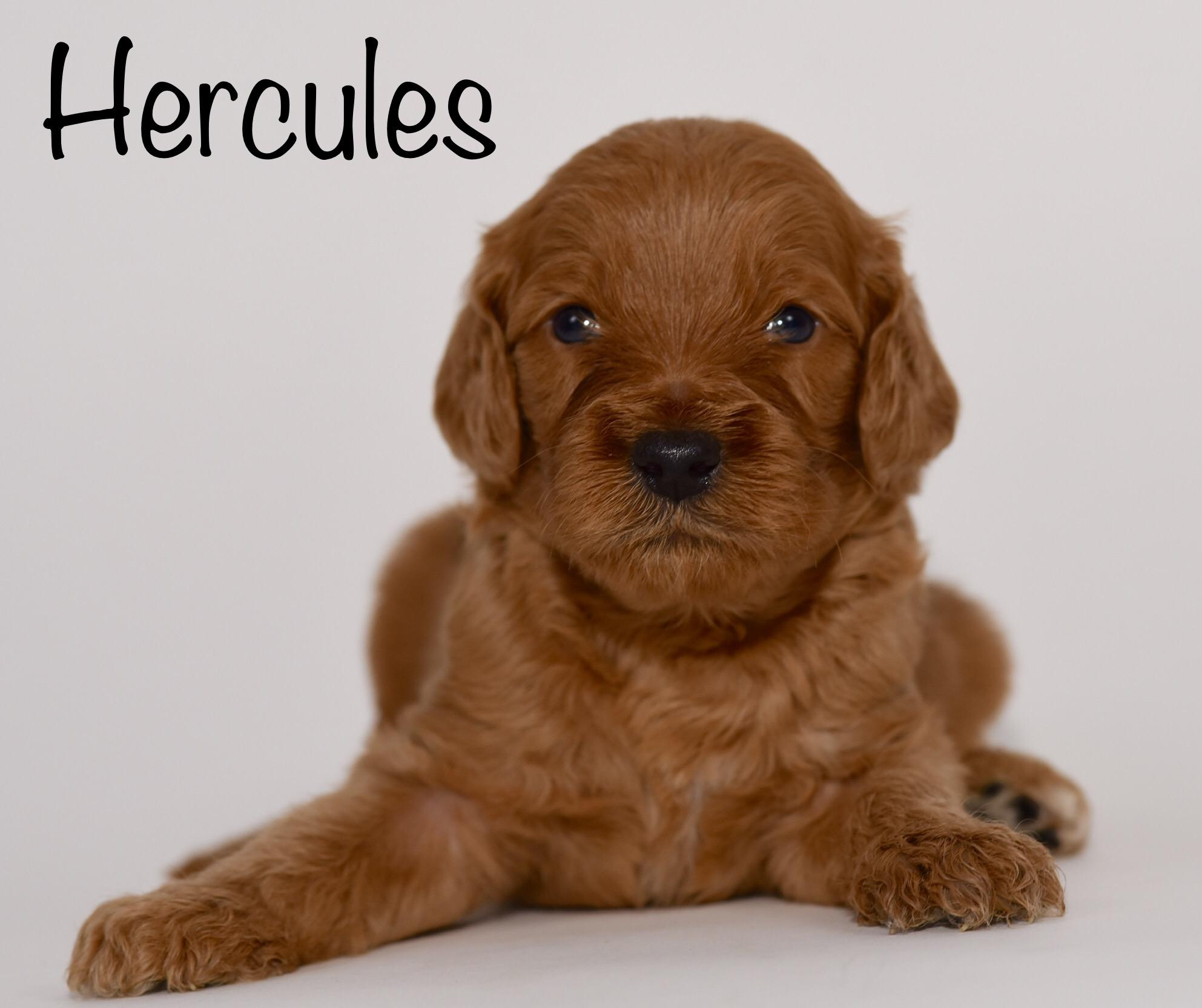 hercules3weeks.jpg