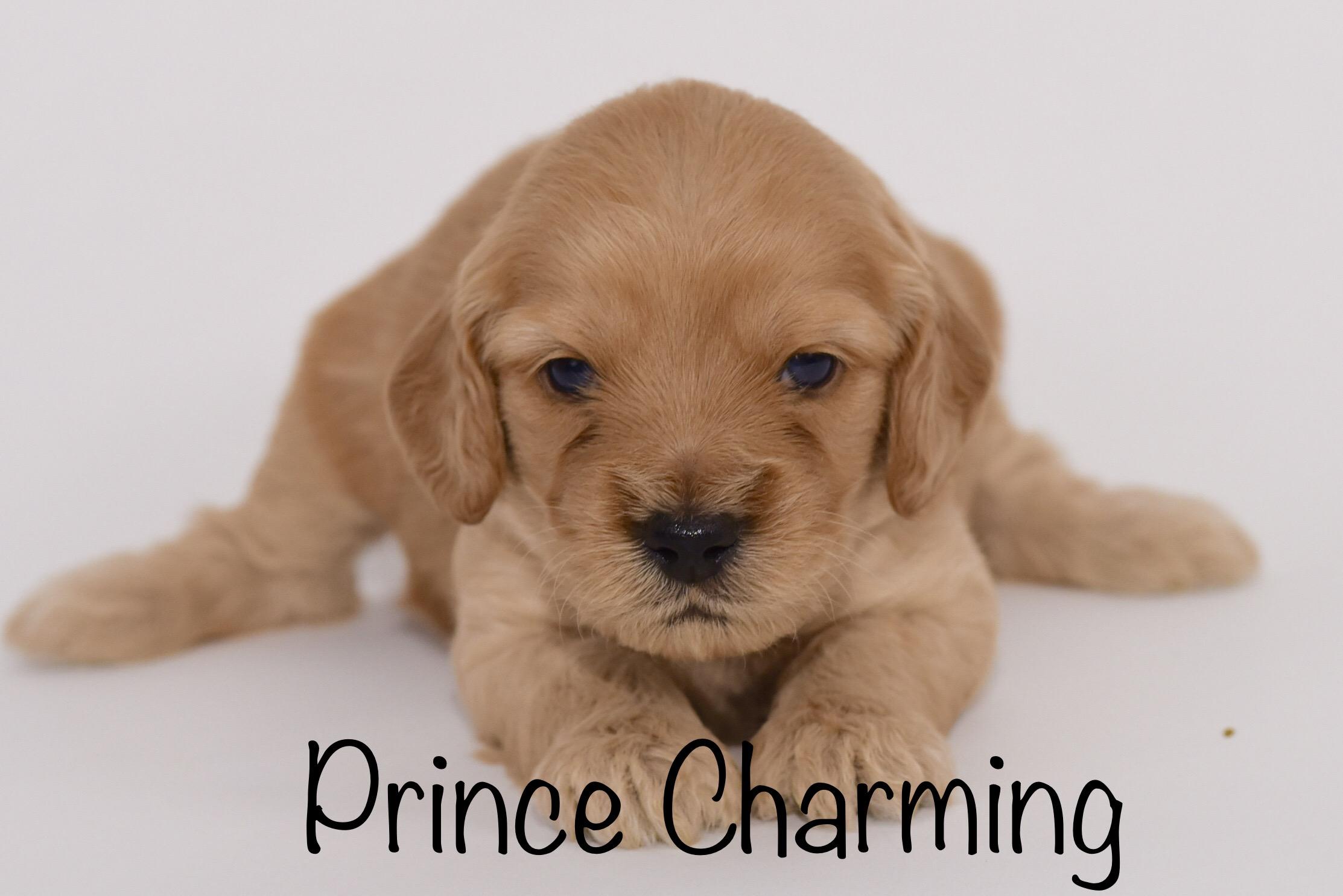princecharming3weeks.jpg