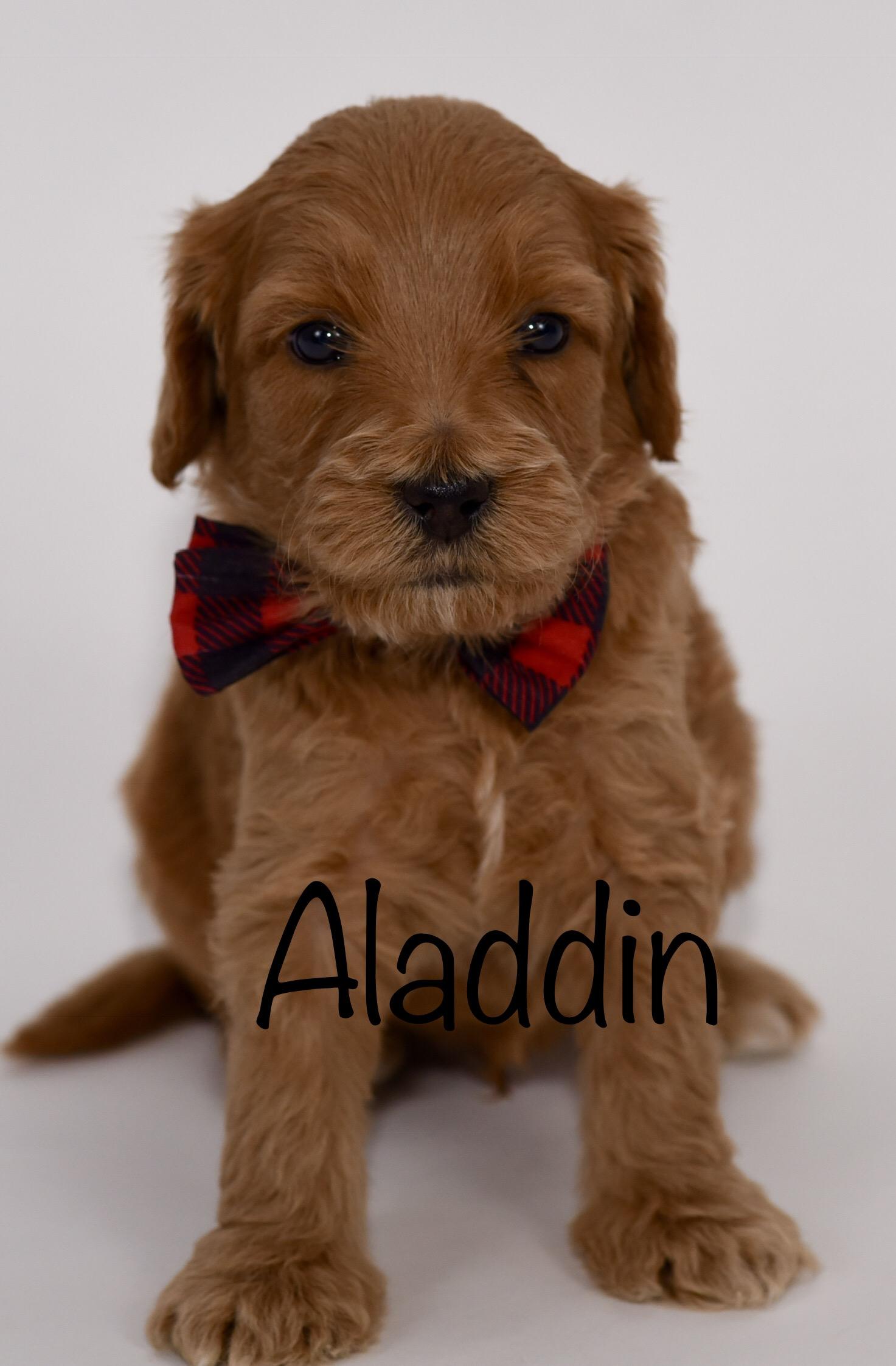 aladdin4weeks.jpg