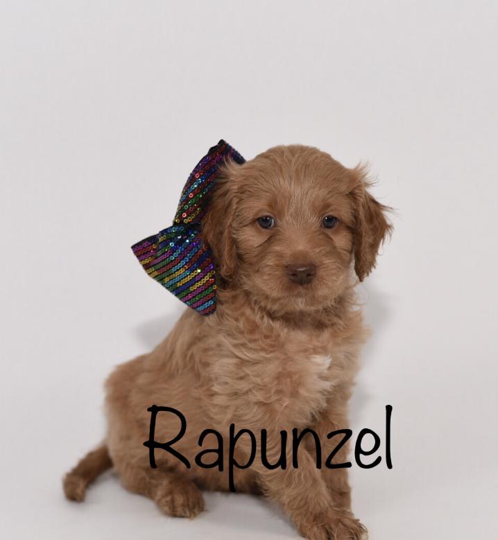 rapunzel6weeks.jpg