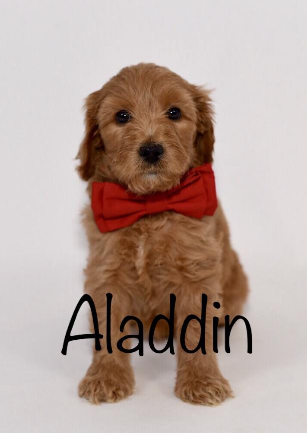 aladdin6weeks.jpg