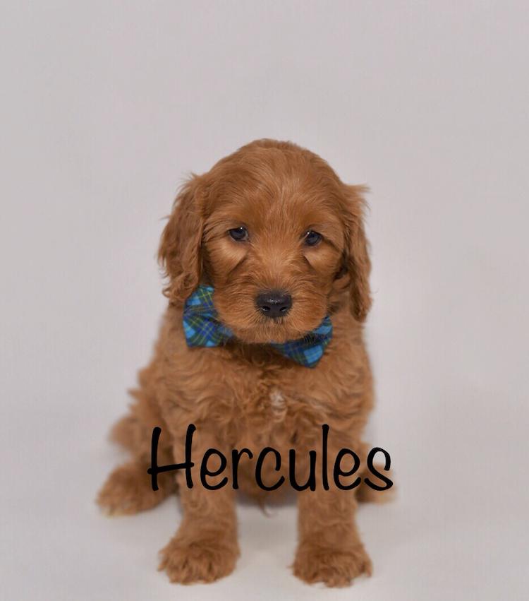 hercules6weeks.jpg